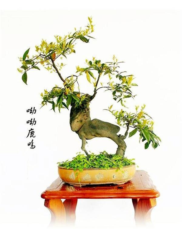 #艺术#中国盆景