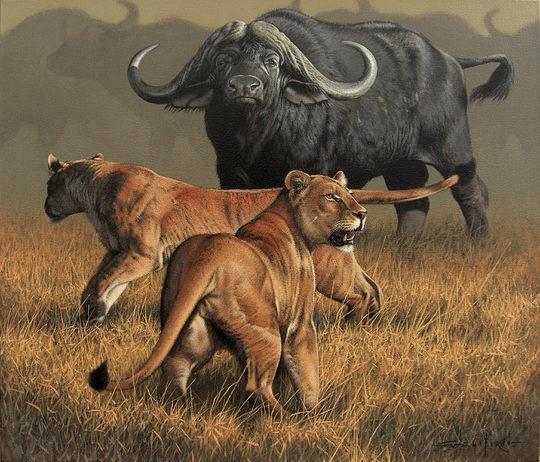 fabrizio caforio动物写实绘画作品欣赏(组图)