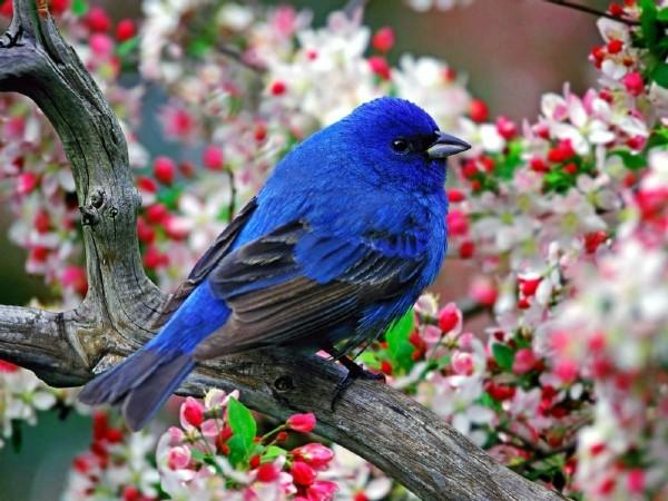 大自然野生动物摄影作品:鸟类合集