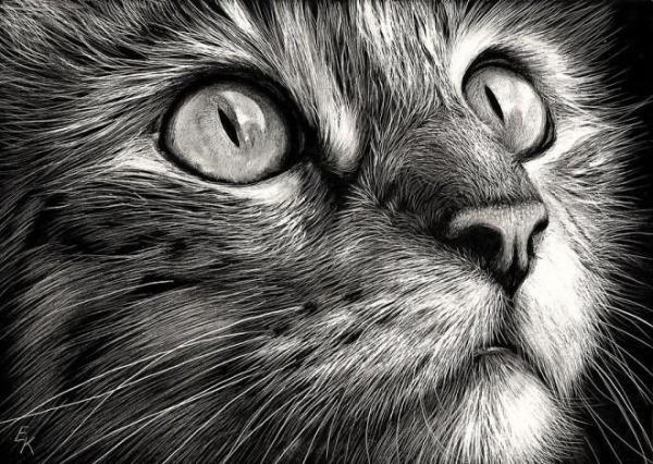 猫咪铅笔画欣赏(组图)