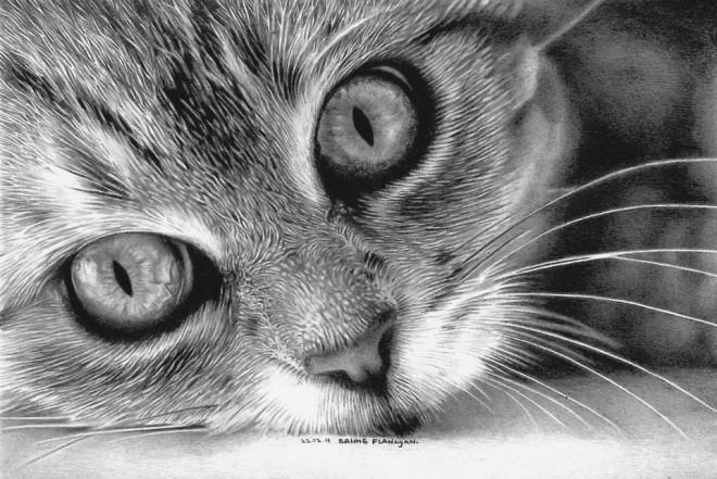 壁纸 动物 猫 猫咪 素描 小猫 桌面 660_441
