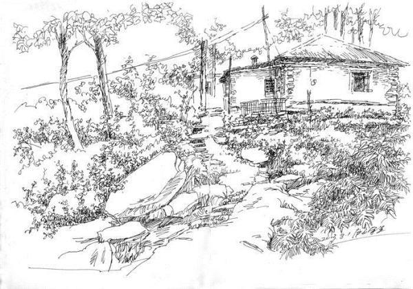 写实钢笔画对水的表现.写实钢笔画怎样画水?这就是水.-植物的钢笔画
