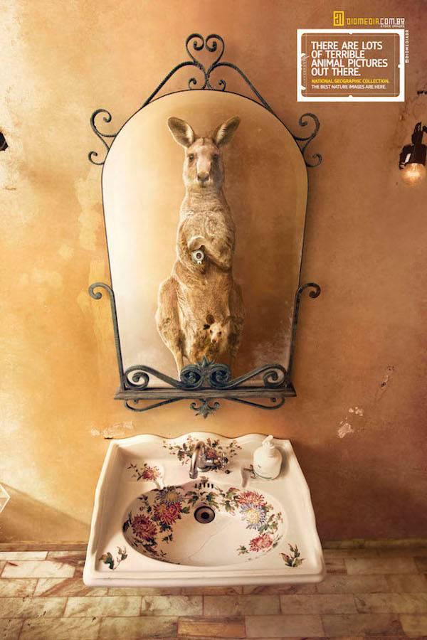 有趣的动物摄影:假若动物在浴室 - 人民美术网 - 中国