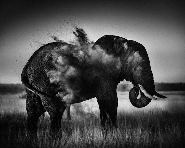 非洲野生动物摄影欣赏:laurent