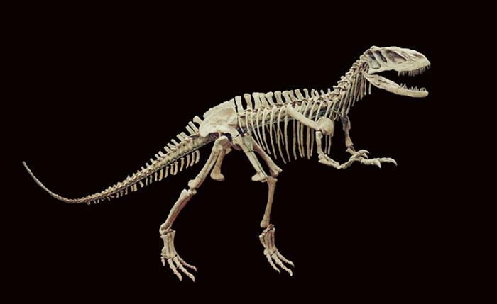 它一出土,不少人都惊呆了,这是世界上罕见的完整恐龙化石,特别是头部。它一面世,引起世界古生物学界的极大关注,还登上了中国恐龙系列邮票。 如果你看过大导演斯蒂芬斯皮尔伯格的系列电影《侏罗纪公园》,一定对凶猛狡诈的霸王龙记忆犹新。而活跃在侏罗纪时期的上游永川龙,满口巨齿,堪称一台移动的绞肉机,它的骨架化石曾多次出国展出,还曾登上香港邮局发行的中国恐龙系列邮票 事件 永川龙将在国家名片上亮相 近期,国家邮政局官网公布了《2017年纪特邮票发行计划》,永川龙成功入选《中国恐龙》特种邮票,并将于