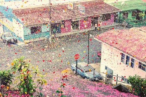 花瓣漫天飞舞的唯美花海创意摄影图片