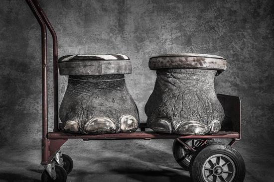 总冠军:充公(Confiscated)摄影师:Britta Jaschinski(英国)